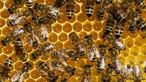 ویژگی های شیمیایی و فیزیکی عسل